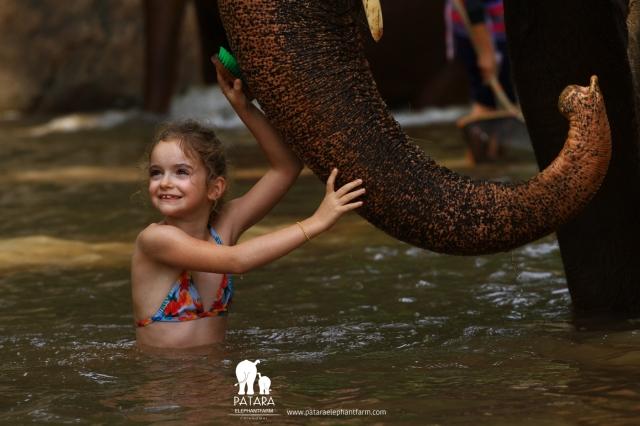 Gallery November 2017 - Patara Elephant Farm