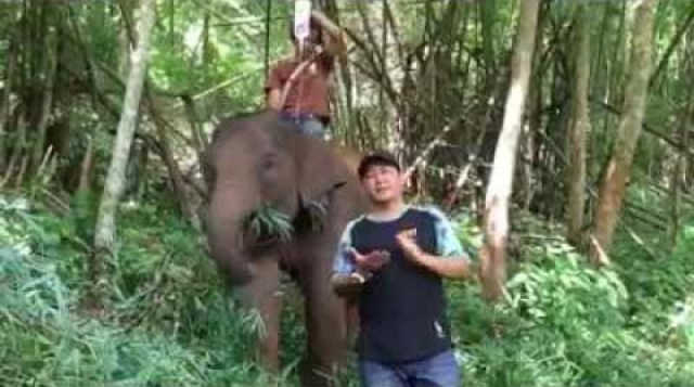 For your better understanding of how elephant riding helps elephants them-self.