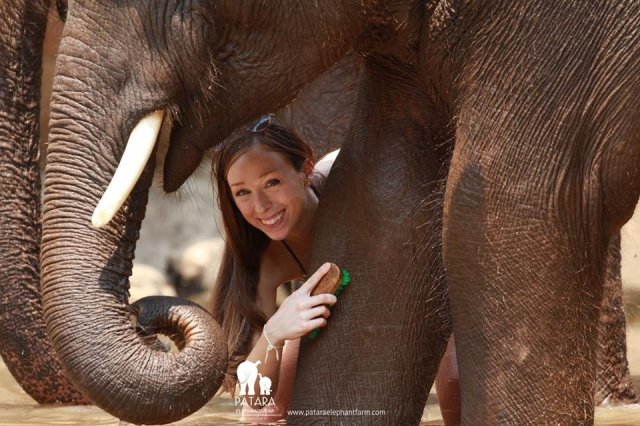 A One on One with elephant of yours own by Patara Elephant Farm