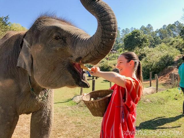 Vital FAQs Answered About Patara Elephant Farm in Chiang Mai