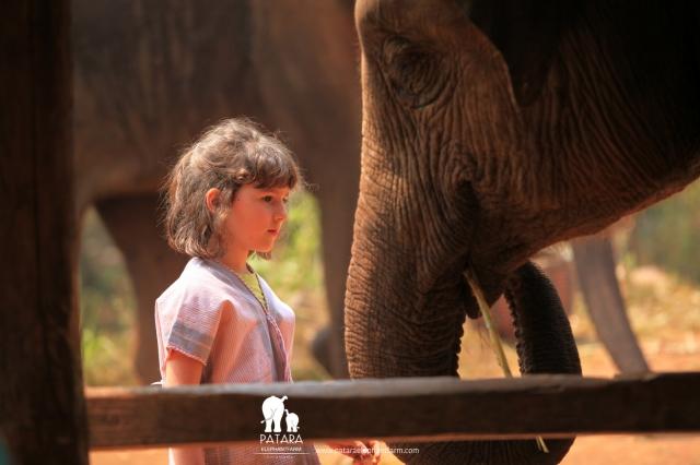 Gallery March 2018 - Patara Elephant Farm