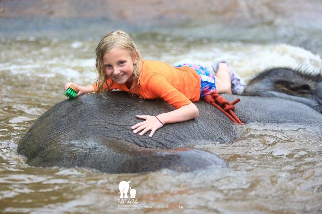 Gallery June 2018 - Patara Elephant Farm
