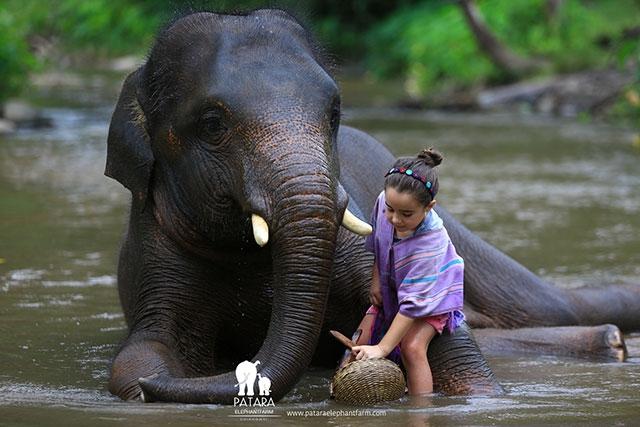 Gallery July 2018 - Patara Elephant Farm