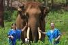 A Walk with Elephants