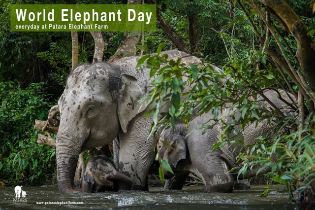 The World Elephant Day August 12,2018