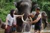 Ethical Elephant Minister