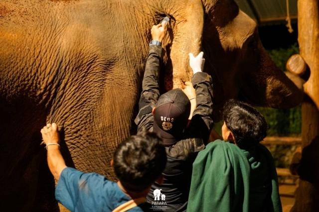 Elephant's health. We care
