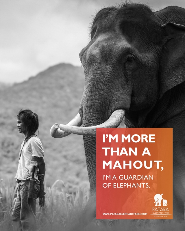 I'M MORE THAN A MAHOUT, I'M A GUARDIAN OF ELEPHANT.
