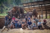The Elephant Health care is our priority. Singing bowl