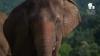 Your Help is Urgently Needed. Save Patara Elephant Farm.