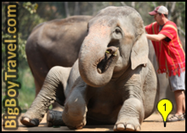 The Best Elephant Camps In Chiang Mai
