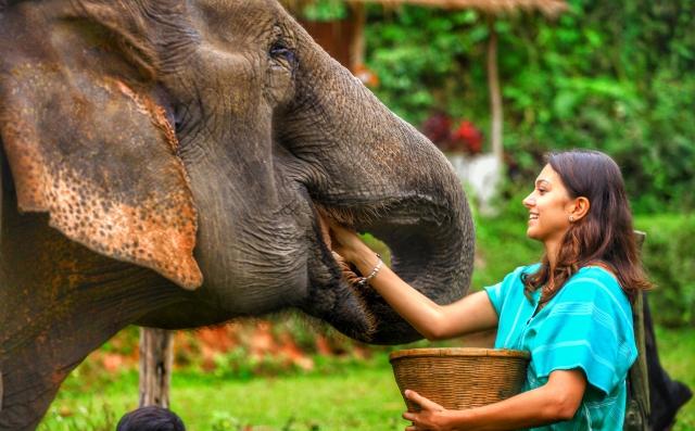 Um dia incrível com elefantes na Tailândia – Patara Elephant Farm – Chiang Mai