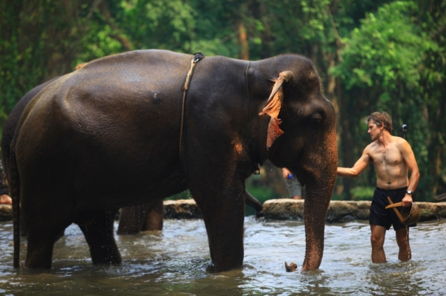 Chiang Mai – How to Elephant in Thailand