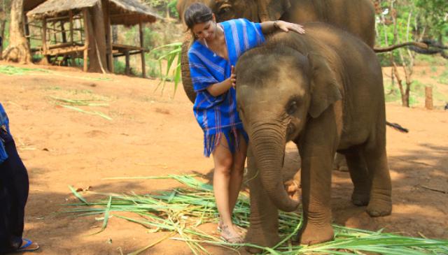 Um dia com Elefantes na Tailandia