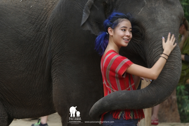 Patara Elephant Farm Chiang Mai – An Elephant Sanctuary