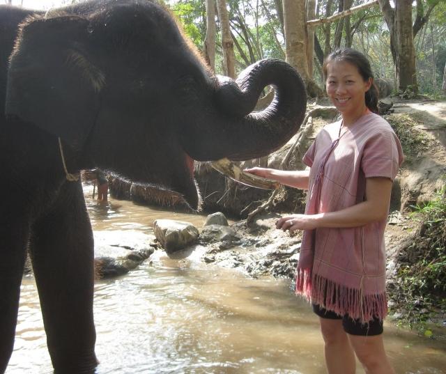 Patara Elephant Farm, Chiang Mai, Thailand