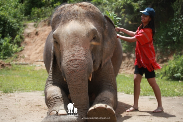 Thailand's Elephant Encounter – Why Choose Patara Elephant Farm