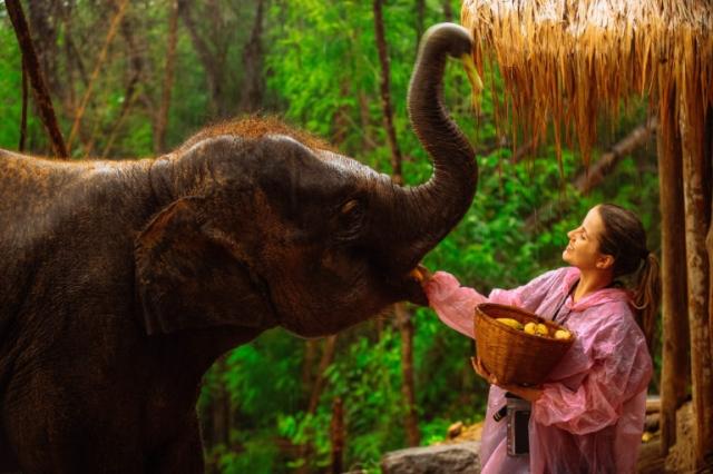 Patara Elephant Farm: Santuário de elefantes na Tailândia