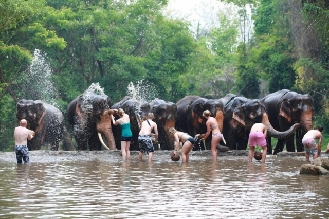 Patara Elephant Farm Chiang Mai 'Lovely elephants in the middle of nature'