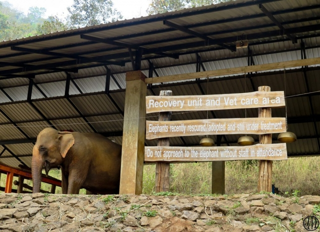 Visiting Patara Elephant Farm