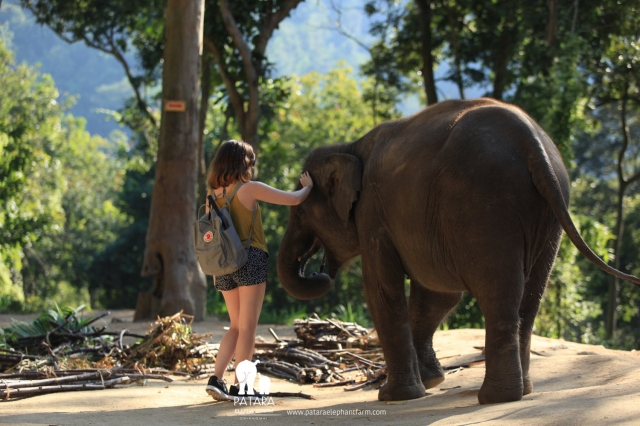 Day 7: Patara Elephant Farm, Chiang Mai