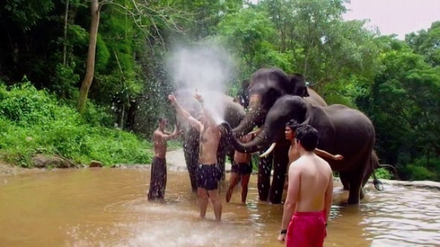 Elephant Trunk Challenge, Chiang Mai 2014